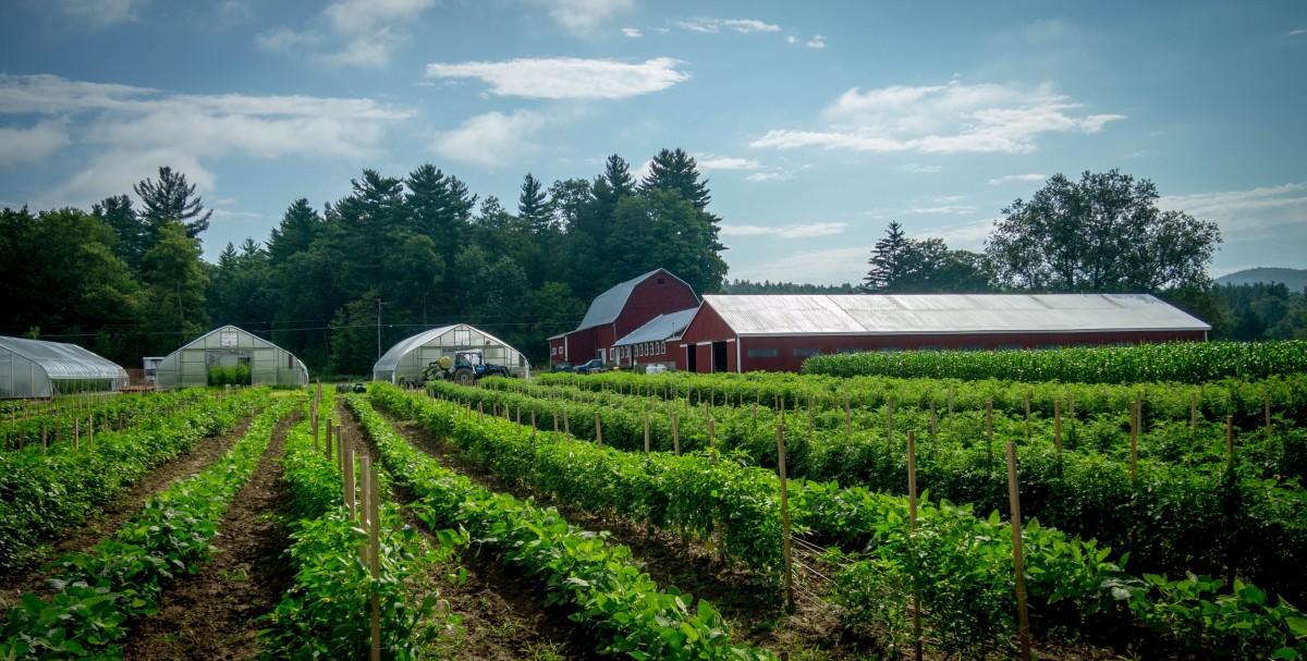 IoT e blockchain a supporto dell'agricoltura sostenibile