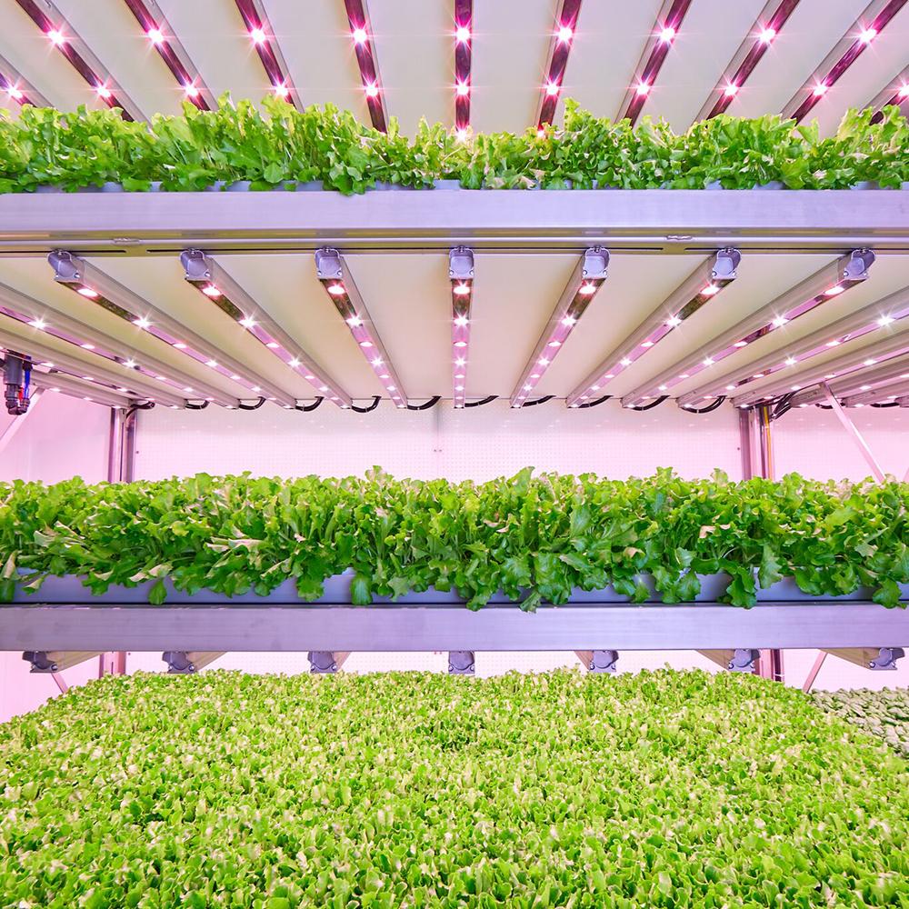vertical farm, Planet Farms