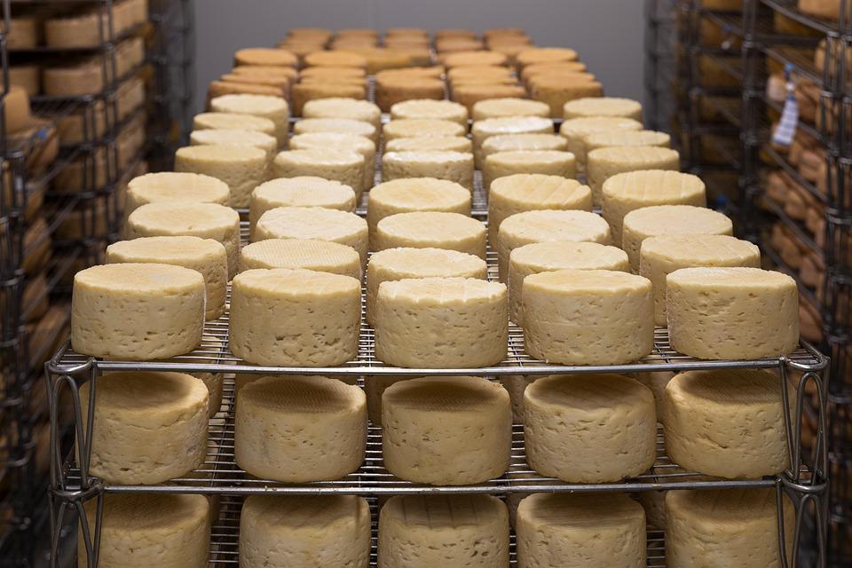 Formaggio, Raffinazione, Latte, Azienda Agricola, Mucca